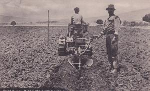Sugar in Fiji , Tractor making Drills for planting, 00-10s