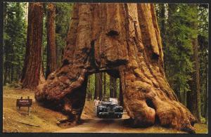 Wawona Tunnel Sequoias Yosemite National Park Unused c1950s