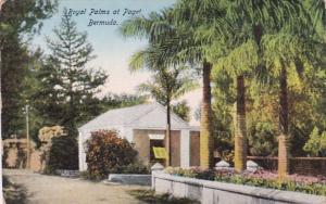 Bermuda Royal Palms At Paget