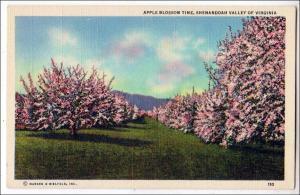 Apple Blossom Time, Shenandoah Valley VA