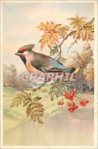 Old Postcard V�UX Bird