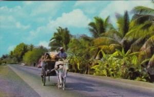 Philippines Bull and Cart On The Way To Market 1966