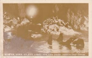 Winter Herd Of Sea Lions Caves Oregon Coast Highway Oregon Real Photo