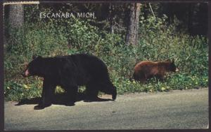 Mother Bear and Cub Postcard BIN