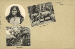 ceylon, COLOMBO, Art Nouveau Multiview, Native Huts, Elephants, Singhalese Girl
