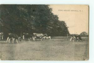 Vintage Postcard Black White Cattle Guernsie Hopewell New Jersey  # 2250
