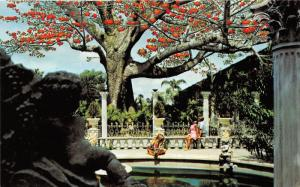 Clearwater Florida~Kapok Tree Inn~People Viewing Kapok Tree~1960s Postcard