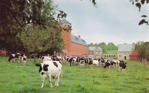 Cows on a Farm, Buildings and Holstein Herd, Augustinian Fathers, Marylake, K...