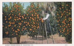Florida St Augustine Garnett Orange Grove Curteich