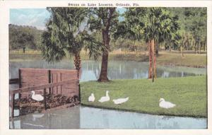 Scenic view, Swans on Lake Lucerne,Orlando,Florida,00-10s