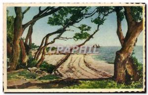 Old Postcard Noirmoutier Bois de la Chaize