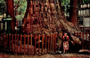 California Santa Cruz County Henry Cowell Redwoods State Park General Fremont...
