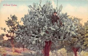 Giant Cactus, man standing on branch of Cactus