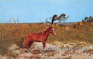 Wind Outer Banks Pony, Ocracoke Island North Carolina, USA Postcards Post Car...