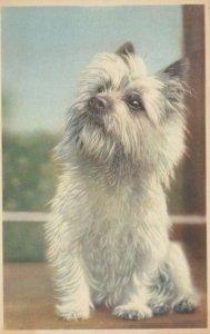 DOG ; Terrier , 1930s