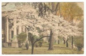 Washington & Lee Campus, The Dogwoods bloom, Lexington, Virginia,00-10s