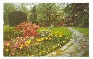 Garden, Dillon, South Carolina, 40-60s
