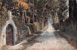 JERSEY CHANNEL ISLANDS UK~VINCHELEZ LANE~POSTCARD 1904