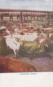 Illinois Chicago Cattle Pens At The Stockyards