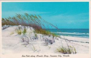 Florida Panama City Beach Sea Oats and Sand Dunes Along MIracle Strip