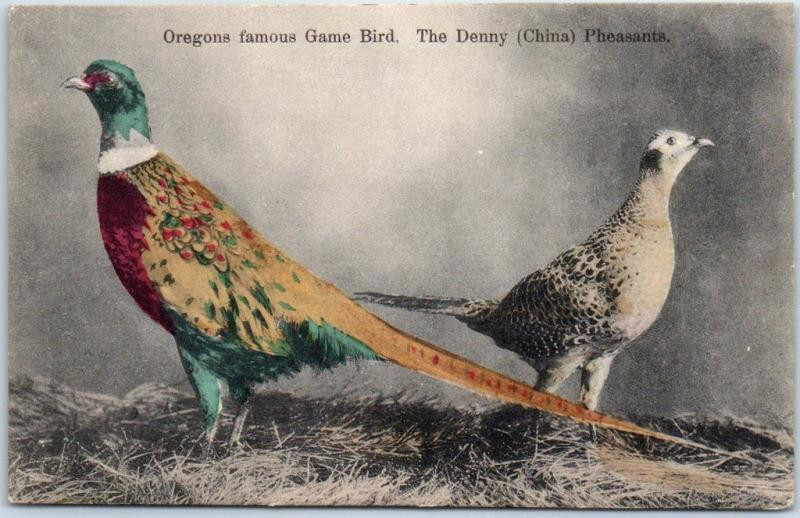 1910s Oregon HAND-COLORED Postcard Famous Game Bird. Denny (China) Pheasants