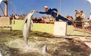 Marine Studios Florida~Jumping Porpoise At Amazing Marine Studios~1960 PC