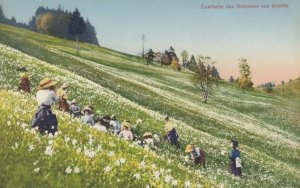 Picking Flowers , 00-10s ; Cueillette des Narcisses aux Avants