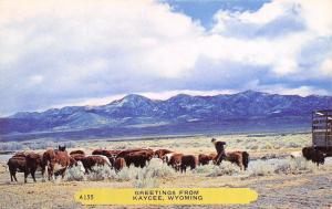 Kaycee Wyoming~Horse Hides Among Hay Farmer's Cattle~Rembrant Postcard 1940s