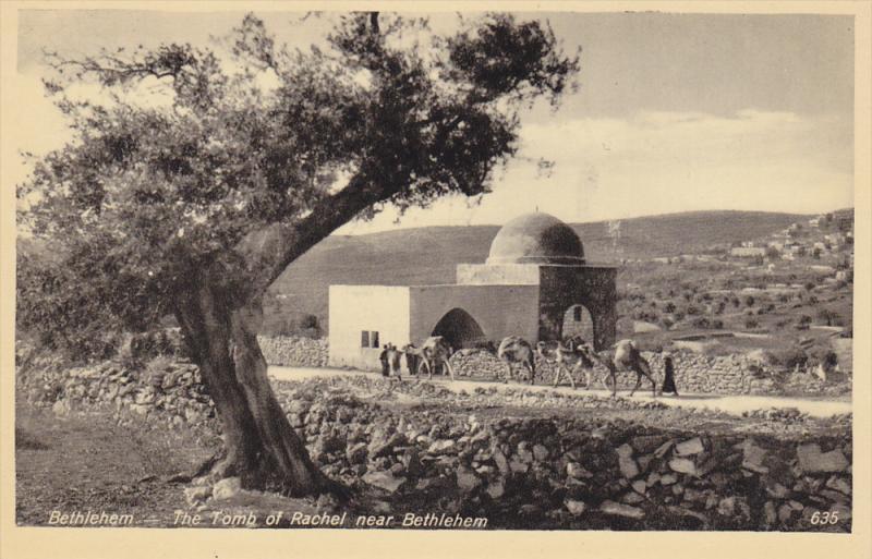 Camels, The Tomb Of Rachel Near Bethlehem, Bethlehem, Palestine, 1910-1920s