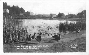 Coos Bay Oregon Wild Ducks Mingus Park Laws 1950s RPPC Photo Postcard 6343