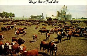 Iowa Huge Feed Lot Where Cattle Are Finished For Market