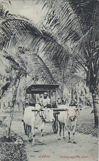 Sri Lanka Ceylon Bullock Traveling Wagon Oxen and Cart