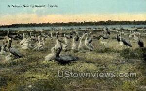 Pelican Nesting Ground Misc FL Unused