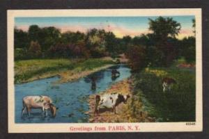 NY Greetings from PARIS NEW YORK PC Postcard Cows