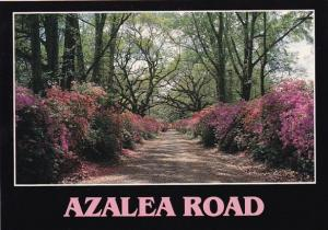 Azalea Road New Orleans Louisiana