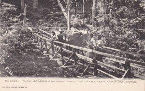 Washington Pack Horses Crossing Foot Log Over Deep Canyon Albertype sk559