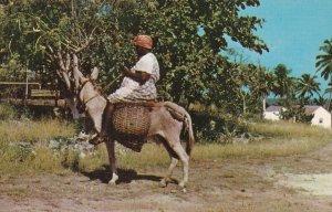 JAMAICA, 1950-1960s; Market Bound, Woman On A Donkey