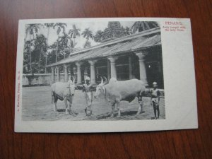 Malaya Postcard 1900's Penang Jetty Temple with the Holy Cows Unused UDB