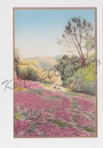 Hand Colored Fred W. Martin Owl Clover Pasadena California Gilded Postcard