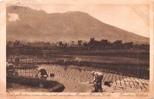 Tadi Planten aan den voet van den Merapi, Fort de Hock Indonesia, Republik In...