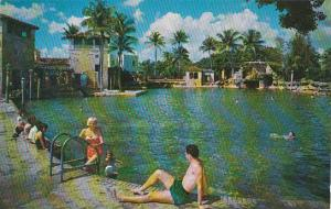 Florida Miami Beach The Famous Venetion Pool In Coral Gables
