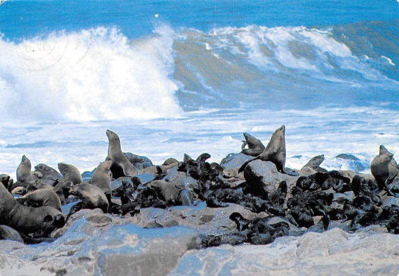 Namibia Thousands of seals can be watched at Cape Cross Swakopmund