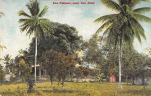 San Juan Porto Rico Las Palmas Trees Scenic Antique Postcard K30637