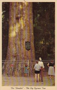 Florida Orlando The Senator The Largest And Oldest Cypress Tree In The U S