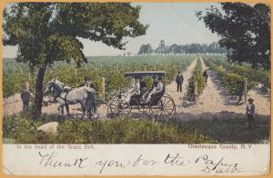 Chautauqua, N.Y., In the Heart of the Grape Belt - 1906