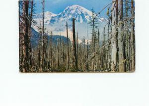 Postcard Mt Raineer Forest Fire Ghost Forest Longmire Washington  # 4217A