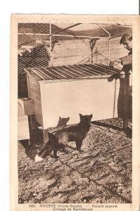 Postal 027396 : Megeve (Haute-Savoie) - Renard argente. Elevage de Rochebrune