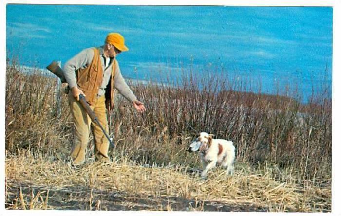 Hunting Dog Fetch The Bird Boy