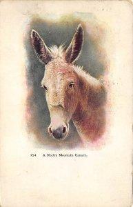 Rocky Mountain Canary Burro 1909