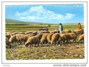 RP Lebanon(Liban), Sheepherder & Flock, 30-50s